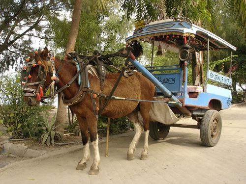http://album.slesta.com/2007/lombok/images/DSC01988.jpg